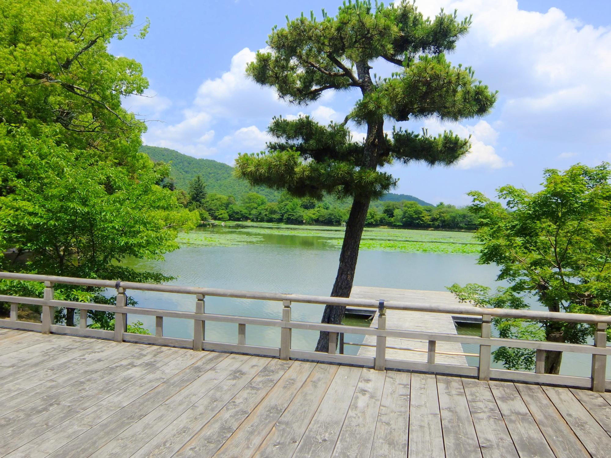 大覚寺 御池