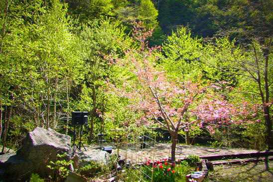 春ライブ20144