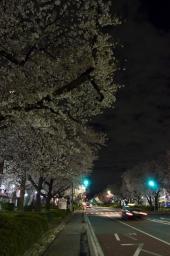 国立の夜桜