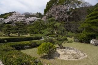 松と桜がお出迎え