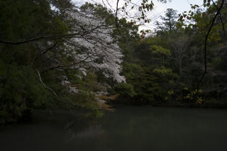 池で一休み