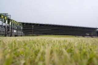 綺麗に刈り取られた芝