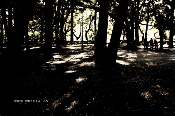 木漏れ日b