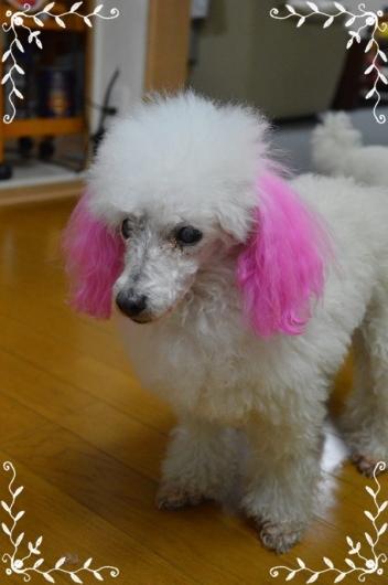 pinky201.jpg