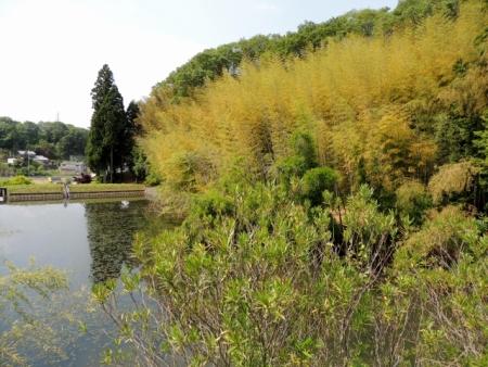 N4253竹林が借景