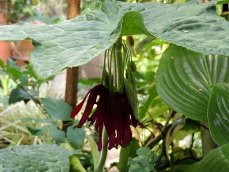 N4295めずらしい花