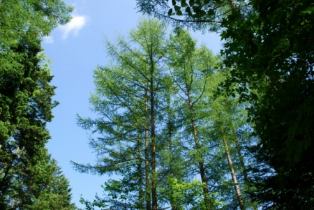 8482樹間を歩く
