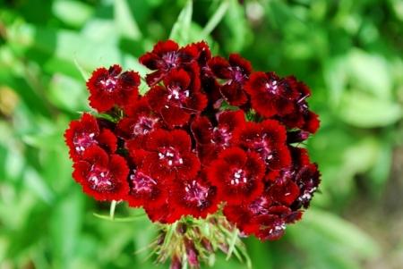 8501紅の花
