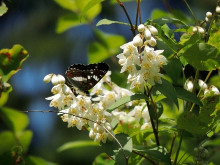 N4719花と蝶