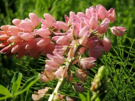 N4759ピンクの花