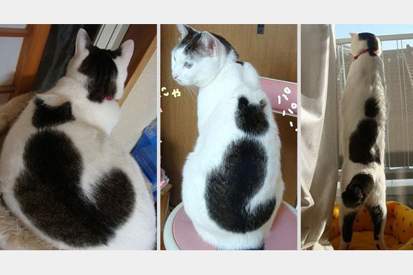 cat-markings-10.jpg
