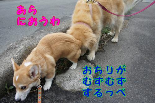 062_new_2