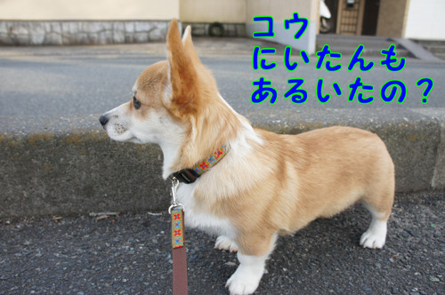060_new