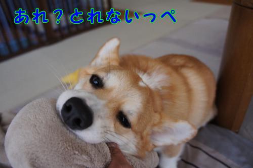 009_new_4