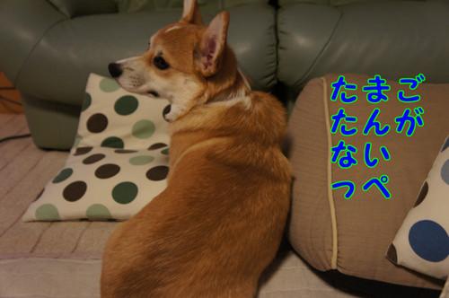 019_new