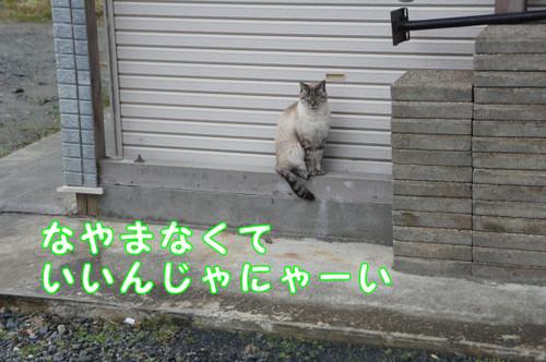 026_new