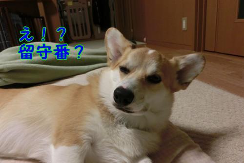 038_new