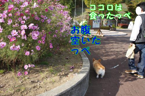 307_new_2