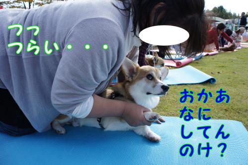 284_new