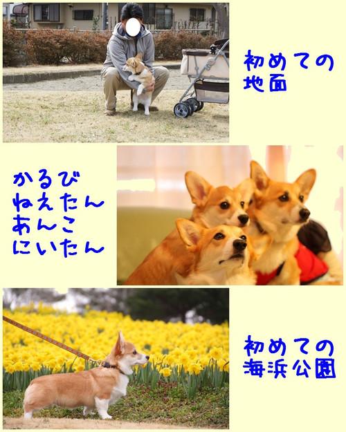 201203_new