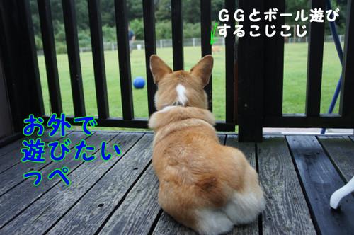 431_new