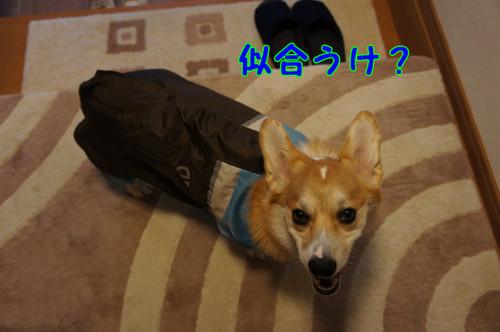 033_new