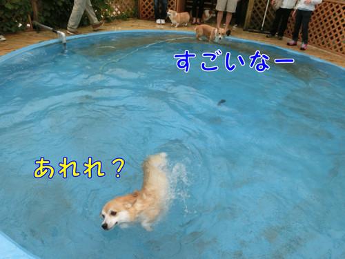 009_new