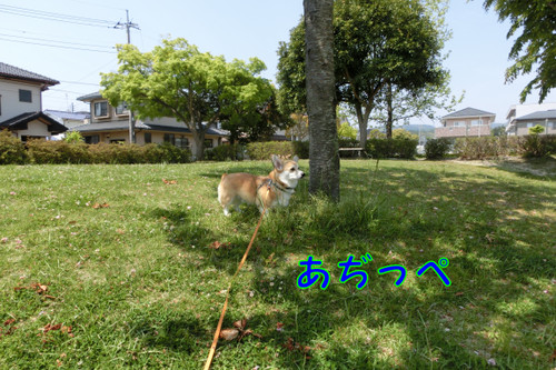 Cimg4624_new