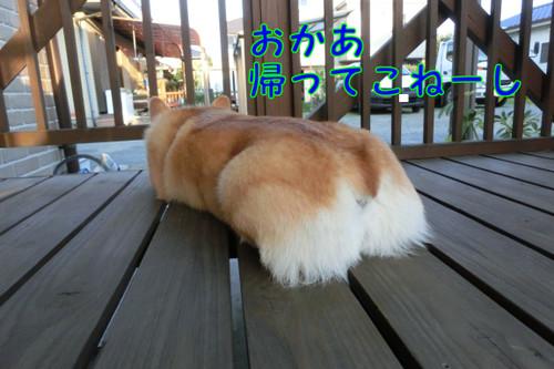 Cimg4621_new