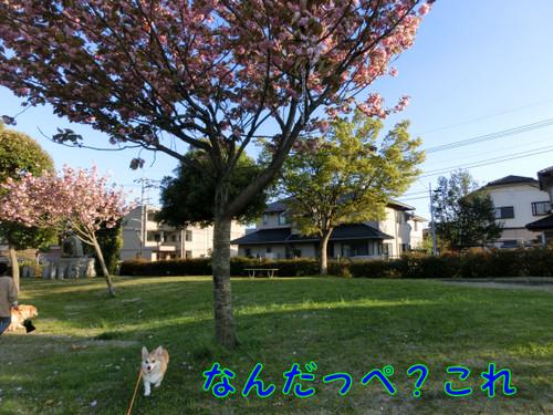 Cimg3995_new