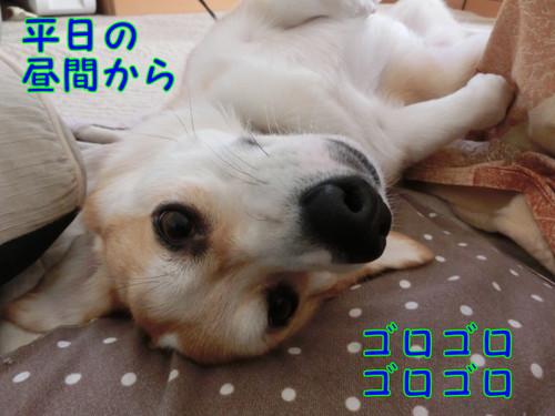 Cimg3954_new