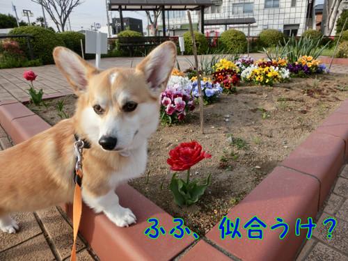 Cimg3846_new