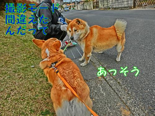 Cimg2981_new