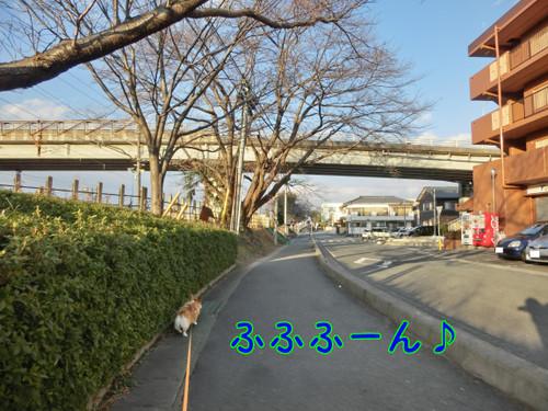 Cimg1939_new