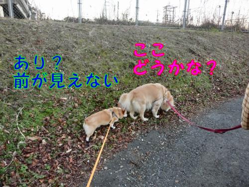 Cimg1371_new
