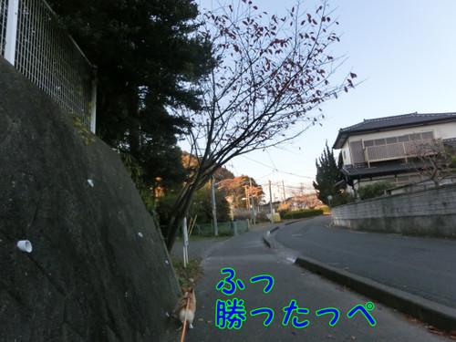 Cimg0840_new