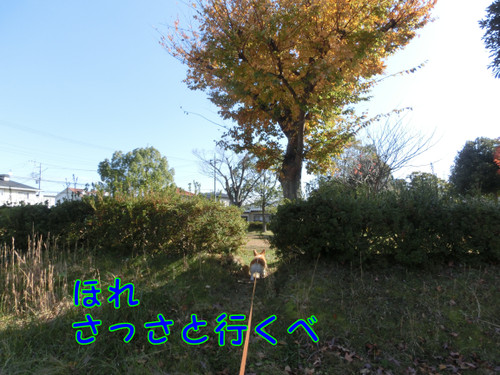 Cimg0867_new