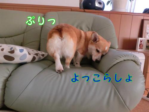 Cimg0694_new