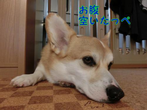 Cimg0446_new