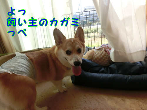 Cimg9466_new