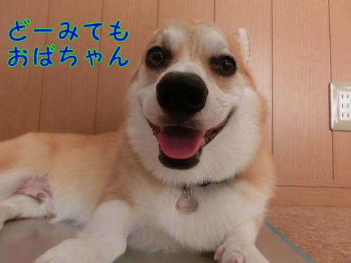 Cimg9462_new