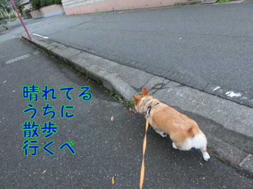 Cimg8956_new