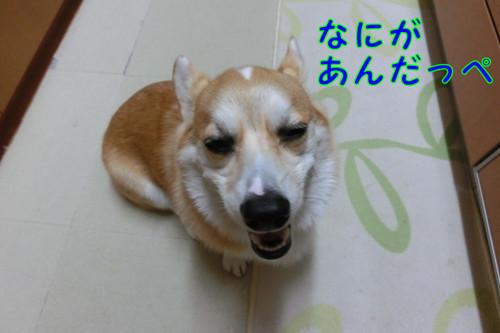 Cimg7748_new