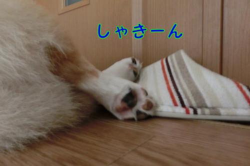 Cimg7046_new
