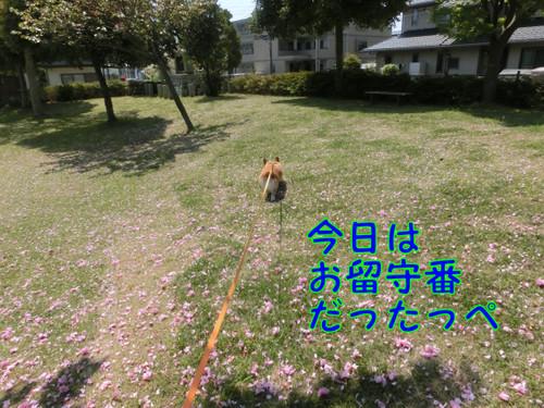Cimg6632_new