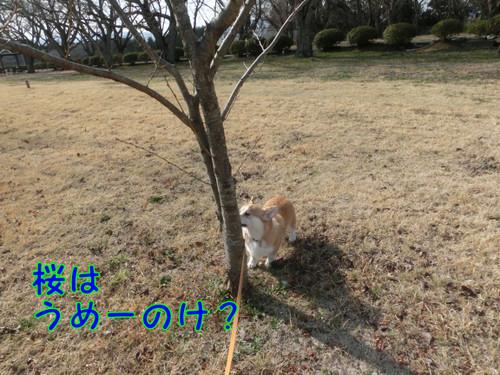 Cimg5479_new