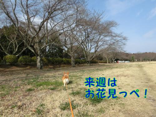 Cimg5465_new