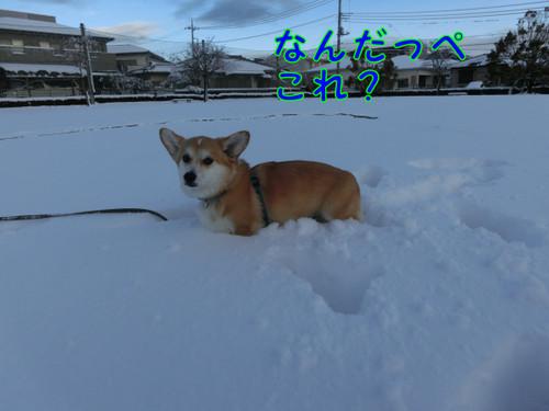 Cimg4625_new