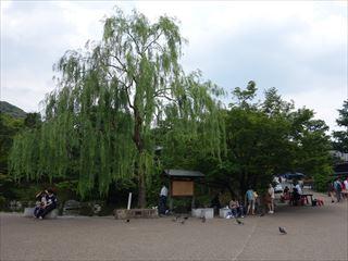 DSC01846-2014.jpg