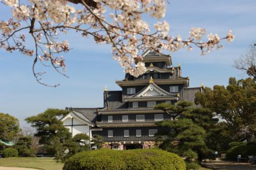 岡山城天守と桜